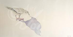 Big-dove_WM