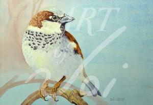 Sparrow-WM