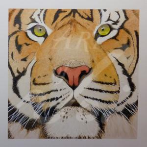 Tiger-1020367