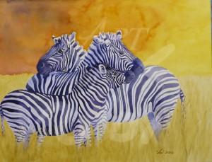 Zebra--1020836