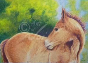 Red Foal_WM